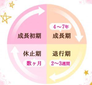 pachiri-uinku-bijin-tsuhan-cycle